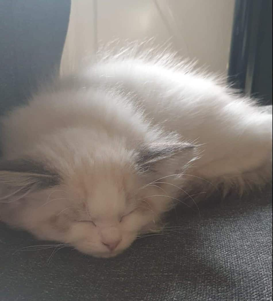 Me and my girlfriends new cat - So calm, when asleep